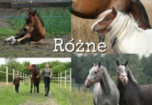 Kolaż zdjęć z końmi
