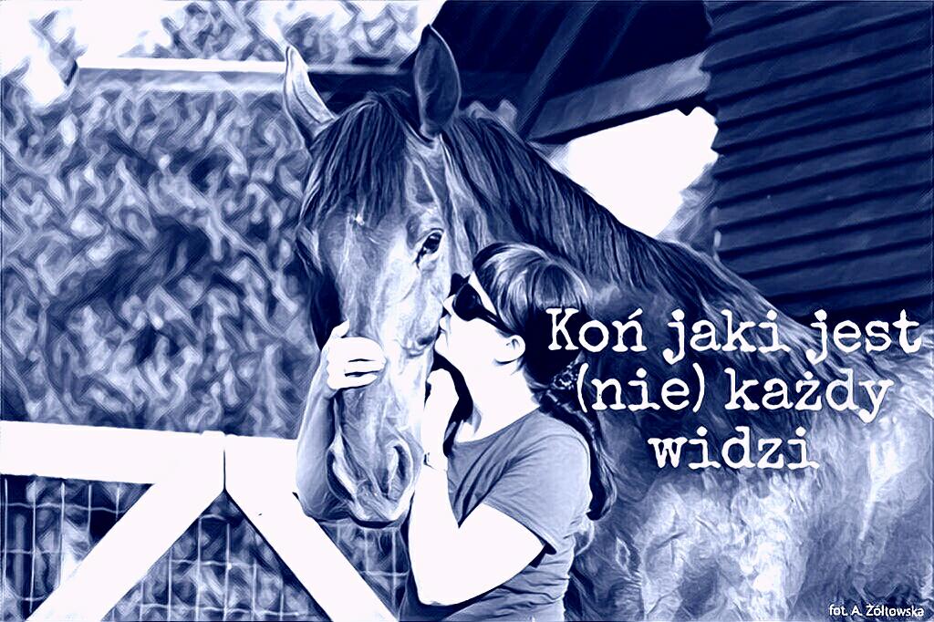 Koń jaki jest (nie) każdy widzi