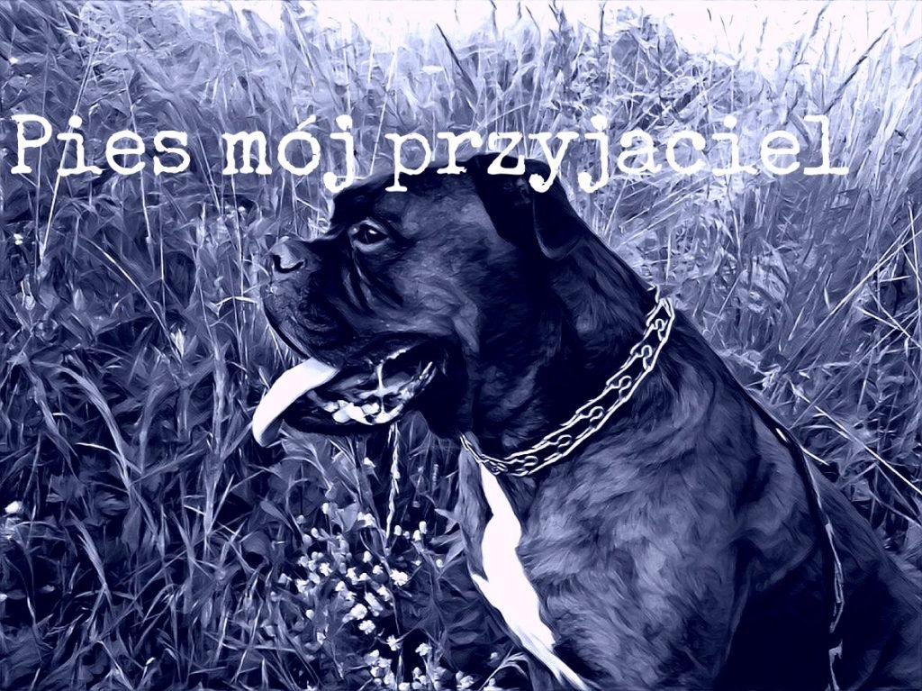 Pies mój przyjaciel