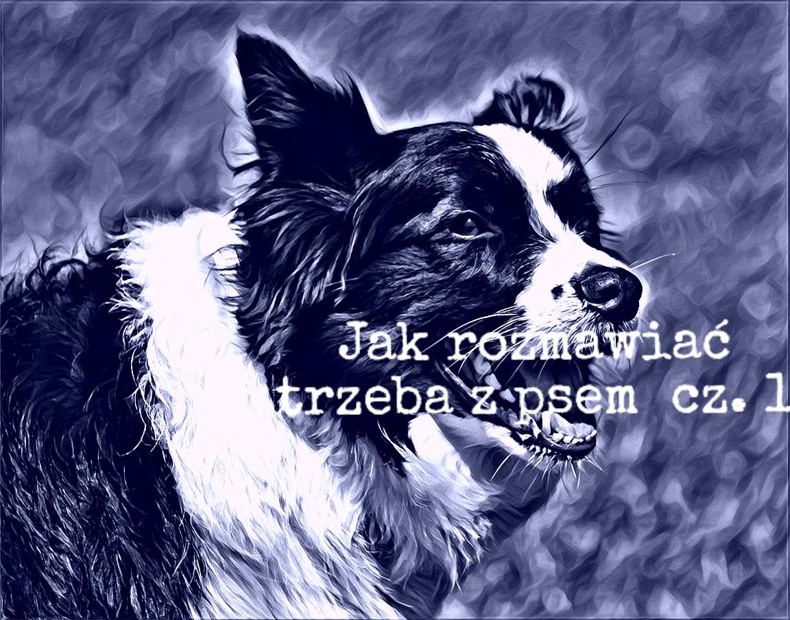 Jak rozmawiać trzeba z psem cz. 1