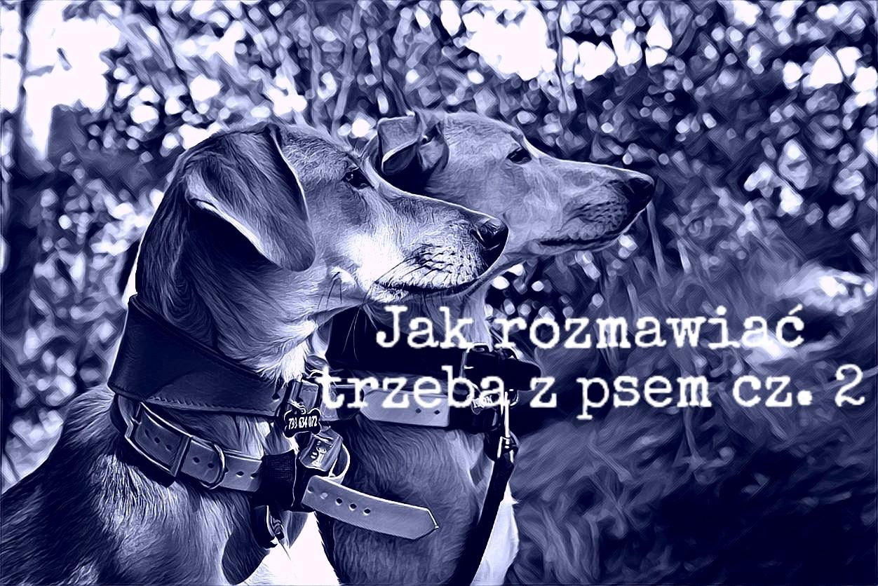 Jak rozmawiać trzeba z psem cz. 2